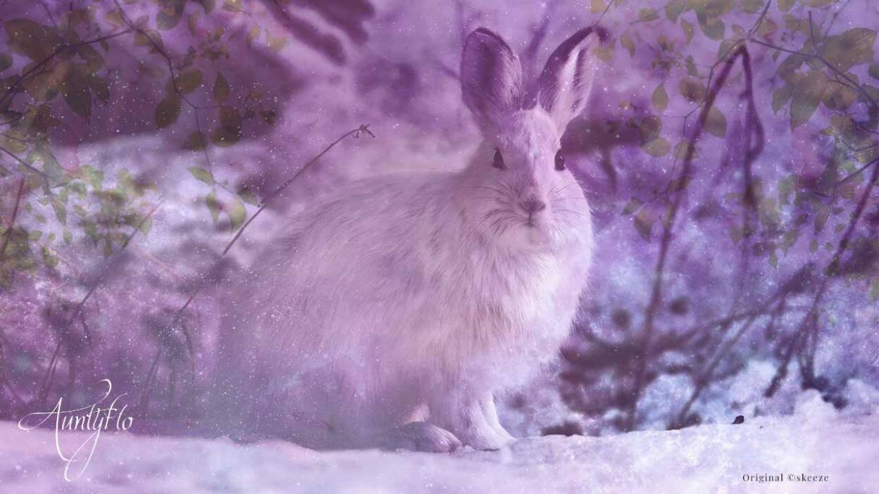 Rabbit or Hare Dream