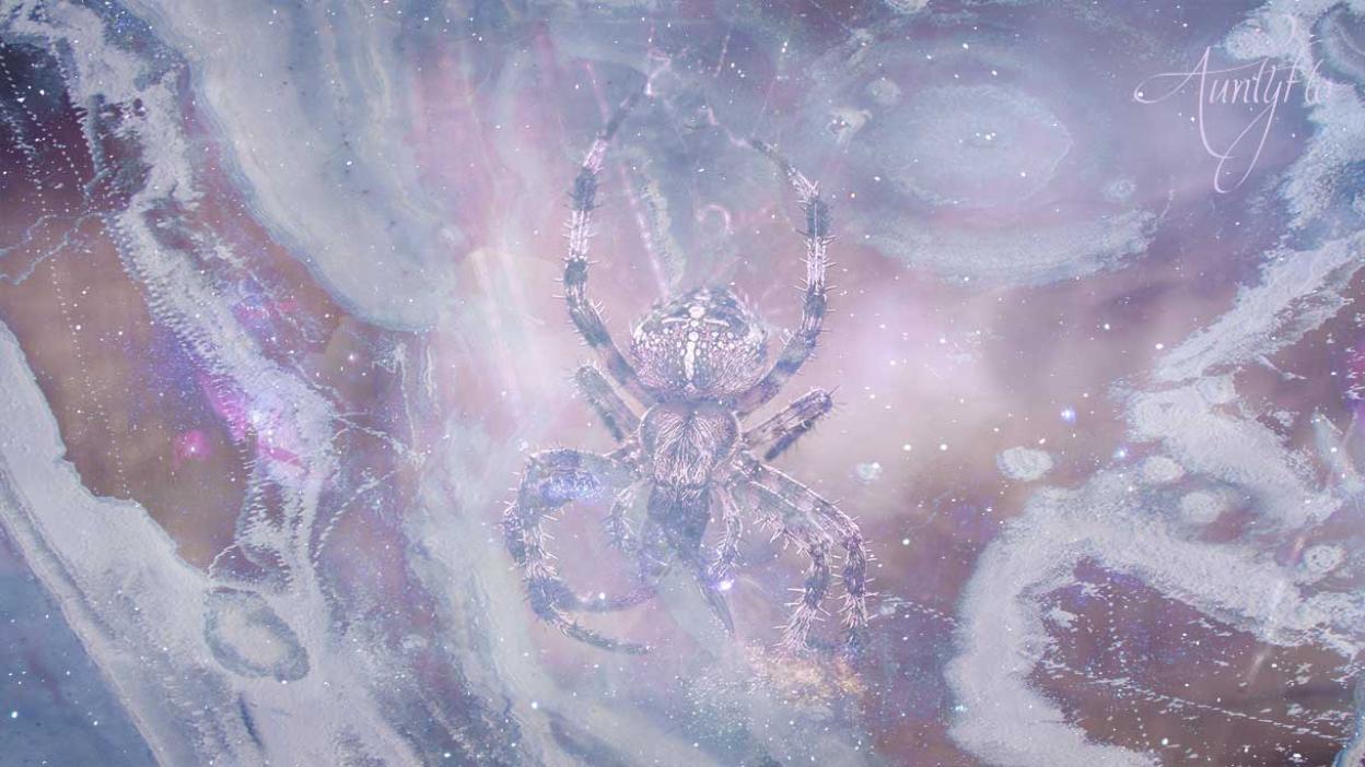 Spiders Crawling Dream Dictionary Interpret Now Auntyflo Com