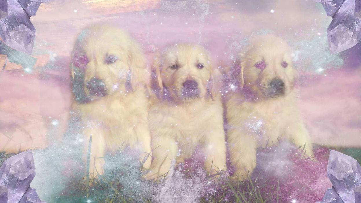Dream Of Puppies Meaning And Interpretation Of Puppy Dreams Interpret Now Auntyflo Com