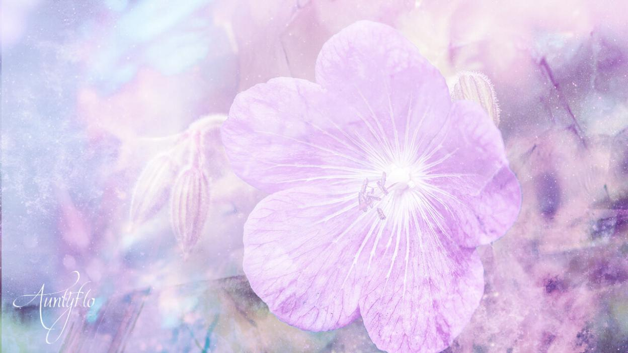Violet Flower Meaning Dictionary Auntyflo Com