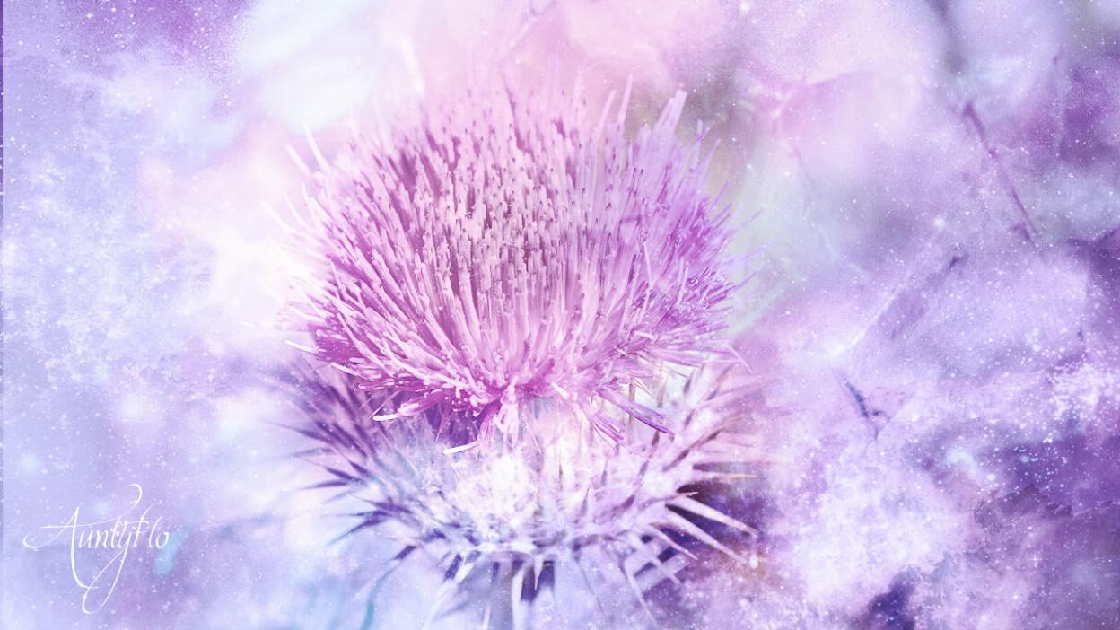 Blessed Thistle