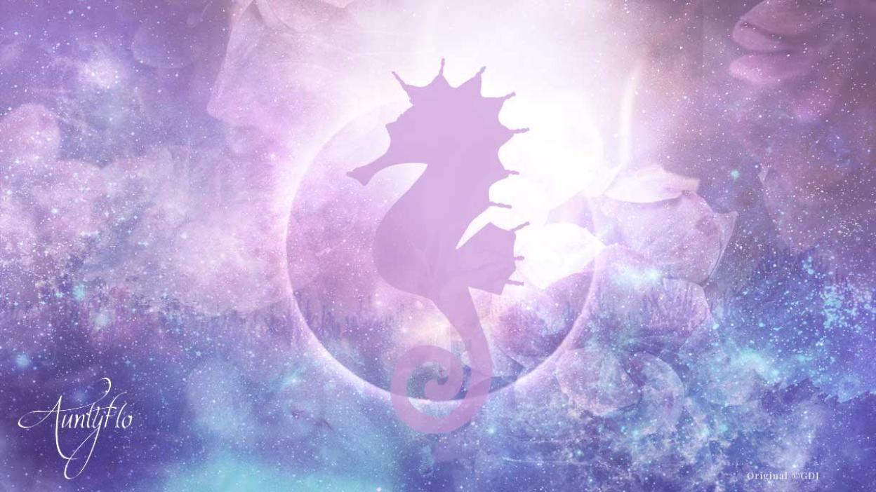 Seahorse Awaken Your Magick Powers Auntyflo Com