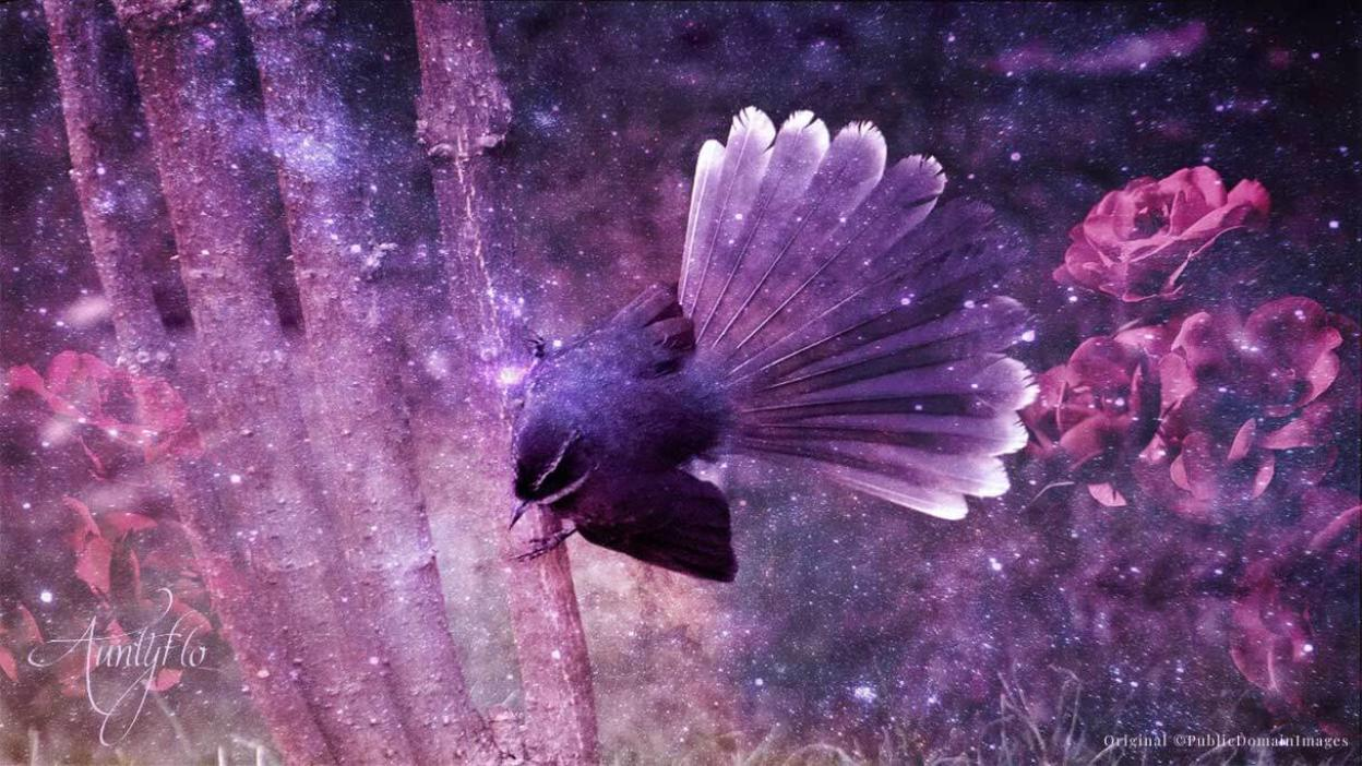 Fantail Awaken Your Magick Powers Auntyflo Com Fantails are small insectivorous birds of australasia southeast asia and the indian subcontinent belonging to the genus rhipidura in the family rhipiduridae. fantail awaken your magick powers