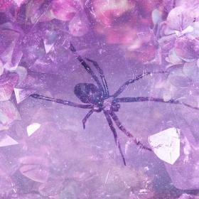 Spider Animal Totem