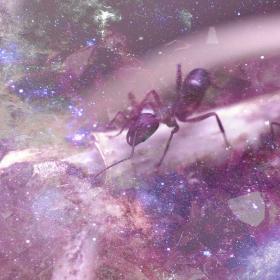 Ant animal totem