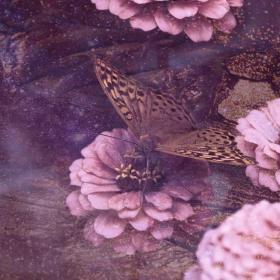 Butterfly Animal Totem