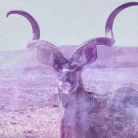 Kudu / Nyala / Eland Symbolism