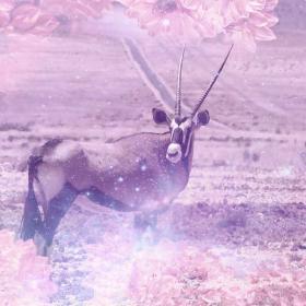 Oryx/Gemsbok