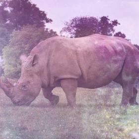 Rhino Symbolism