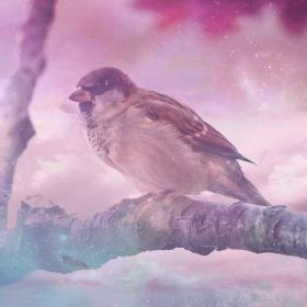 Sparrow spiritual meaning